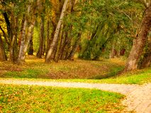 Park in autumn. Park in autumn with stream and paved road royalty free stock photography