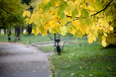 Park in the autumn. A stroll on the a park street in the fall royalty free stock images