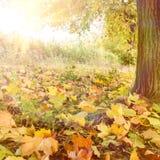 Park in autumn Stock Photo