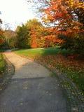 Park in the autumn sunlight Stock Photo