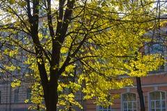 park in an autumn sunny day Stock Photos