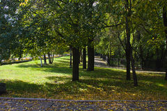 Park in an autumn sunny day Stock Image