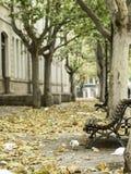 Park autumn trees Royalty Free Stock Photography