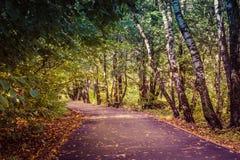 Park. Autumn park, walking path through the birch grove of walnut Stock Photos