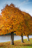 Park in Autumn with Yellow Colored Trees and Lake Royalty Free Stock Images