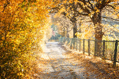 Park Autumn Yellow Leaves Stock Photo