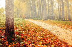 Park in autumn with yellowed fallen leaves - autumn foggy colored landscape Royalty Free Stock Photos