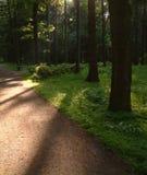 park avenue zdjęcia royalty free