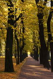 Park avenue in Summer garden, St. Petersburg Stock Image