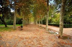 park avenue Obraz Royalty Free