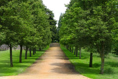 Park Avenue. Row of trees to create an avenue in an English country house garden Royalty Free Stock Photography
