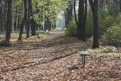 Park Avenue gestreut mit gefallenen Blättern am sonnigen Herbsttag Lizenzfreies Stockfoto