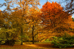 Park of Bad Homburg in autumn Royalty Free Stock Photography