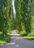 Park in Bad Mergentheim Stock Photography