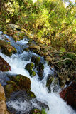 Park Banias Stock Photo