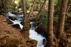Park Banias Stock Photography
