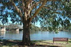 Park-Bank unter einem Baum Stockfotografie