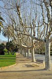 Park in Barcelona Royalty Free Stock Photography