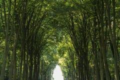 Park baroku Augustusburg kasztel jest jeden pierwszy znacząco tworzenia rokoko w Bruhl blisko Bonn, Północny Rhine Westphal Fotografia Royalty Free