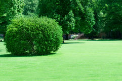 Park with beautiful green lawns Royalty Free Stock Photography