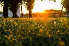 Park at beautiful sunset Royalty Free Stock Photos