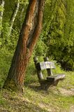 Park Bench. A bench in a wooded park Stock Photography