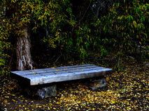 Park Bench. In Autumn Royalty Free Stock Image