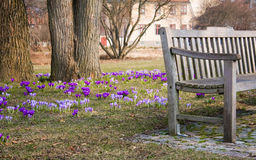 Park Bench. Sitting in the sun with the wonderful spring colors in the background Royalty Free Stock Image
