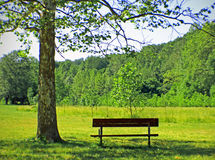Park Bench. With a tree shading the area Stock Photos