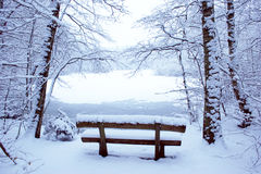 Park bench. In the snow with a pool in the background Stock Image