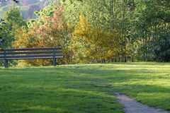 Park and bench Stock Image