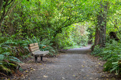 Park bench along a foot trail Royalty Free Stock Images