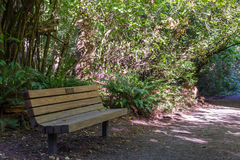 Park bench along a foot trail Royalty Free Stock Image