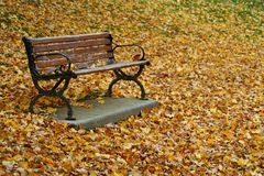 Park Bench in Autumn Stock Photos