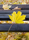 Park bench in autumn Stock Photo