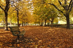 Park Bench In Autumn. Solitary park bench in a park clearing, the ground covered with fallen leaves Stock Image