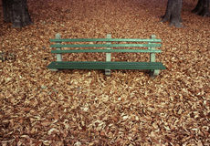 Park Bench with Autumn Leaves Royalty Free Stock Image