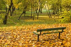 Park bench with autumn leaves. Park bench surrounded by colorful fall leaves royalty free stock photos