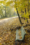 Park bench with autumn leaves Royalty Free Stock Images