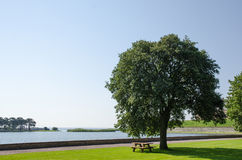 Park bench by a big tree at seaside Stock Image