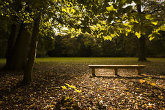 Park bench in fall Royalty Free Stock Image