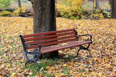 Park bench and fall color Royalty Free Stock Photos