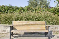 Park Bench with Fountaingrass and Rose Bushes Royalty Free Stock Photo