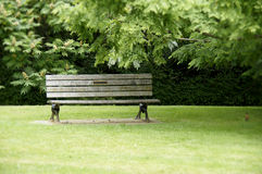 Park Bench with Green Grass Stock Images