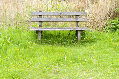 Park bench in green meadow and reed Royalty Free Stock Images