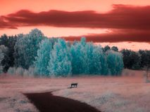 Park bench infrared. A park bench in infrared with altered colors Royalty Free Stock Image