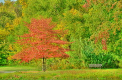 Park Bench by Lake Royalty Free Stock Images