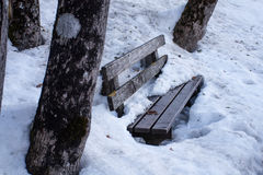 Park bench made of wood between tree trunks covered with  dirty Stock Photos