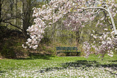 Park Bench and Magnolia Tree Royalty Free Stock Photos
