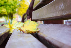 Park bench with maple leaves in autumn close up Royalty Free Stock Images